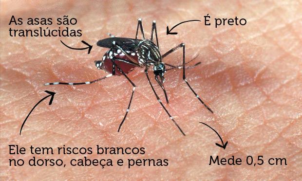 Resultado de imagem para chikungunya